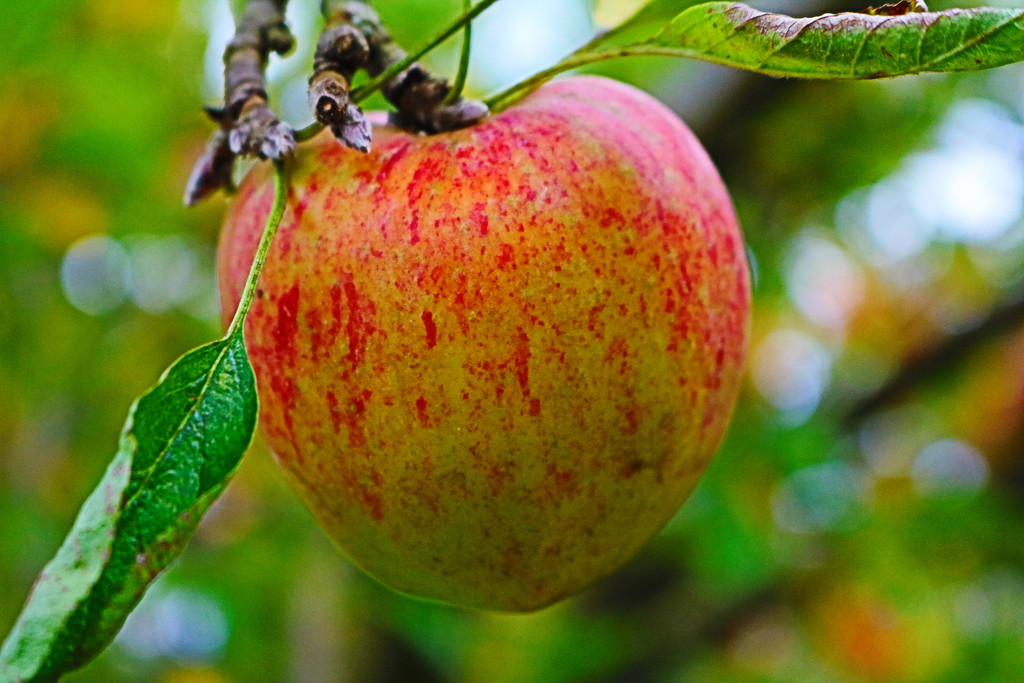Apple Of My Eye by phil_sandford
