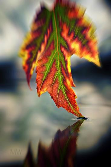 2016-10-13 fall by mona65