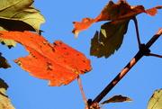 13th Oct 2016 - Beautiful Autumn Day!