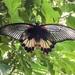 Mariposa  by cocobella