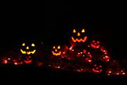 12th Oct 2016 - Pumpkin Patch