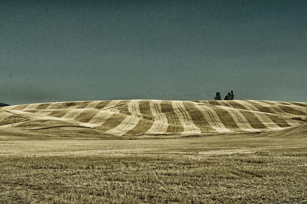 Strips by byrdlip