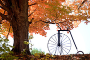 14th Oct 2016 - The TREE and the BIKE!