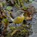 WATERSIDE BIRD - ONE by markp
