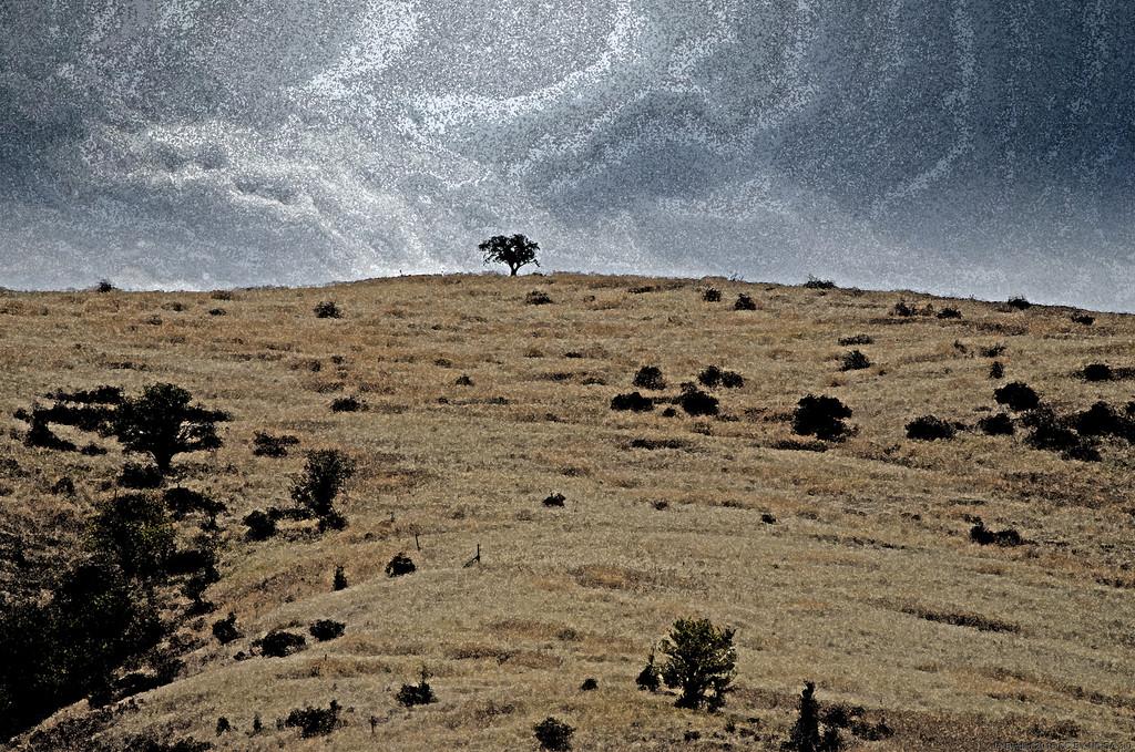 Tree On The Hill by byrdlip