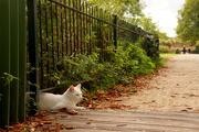 12th Oct 2016 - White cat