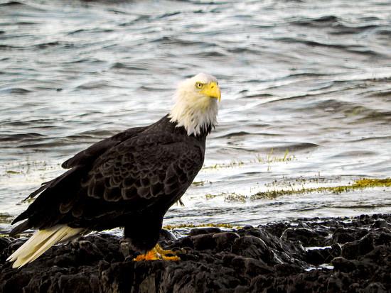 Close to Home, & I Got my Eagle,Too! by Weezilou