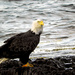 Close to Home, & I Got my Eagle,Too!