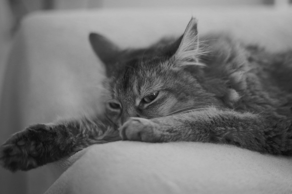 Snoozing by shepherdmanswife