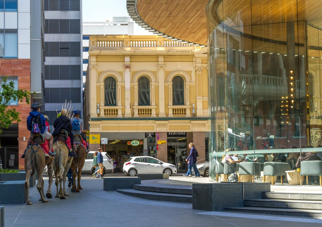 Camels in the City  by gosia