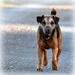 Friendly dog by rosiekind