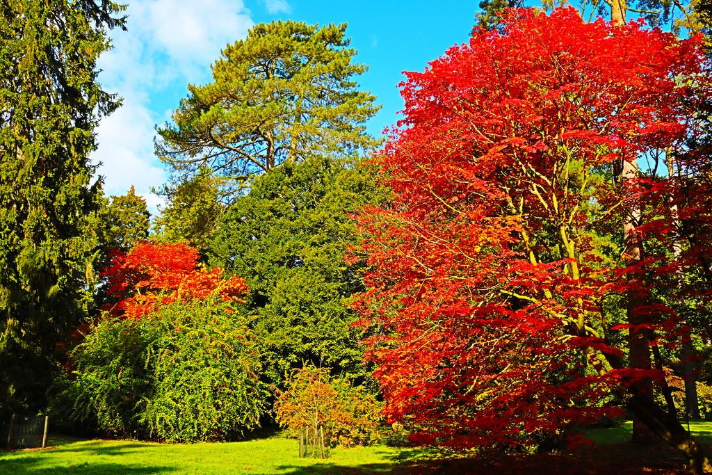 Autumn Fire at Westonbirt by phil_sandford