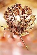 17th Oct 2016 - 2016-10-17 leaf life span