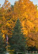 17th Oct 2016 - Colors in my neighborhood