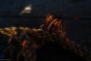 17th Oct 2016 - Fire