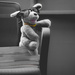 (Day 248) - Classy Greyhound by cjphoto