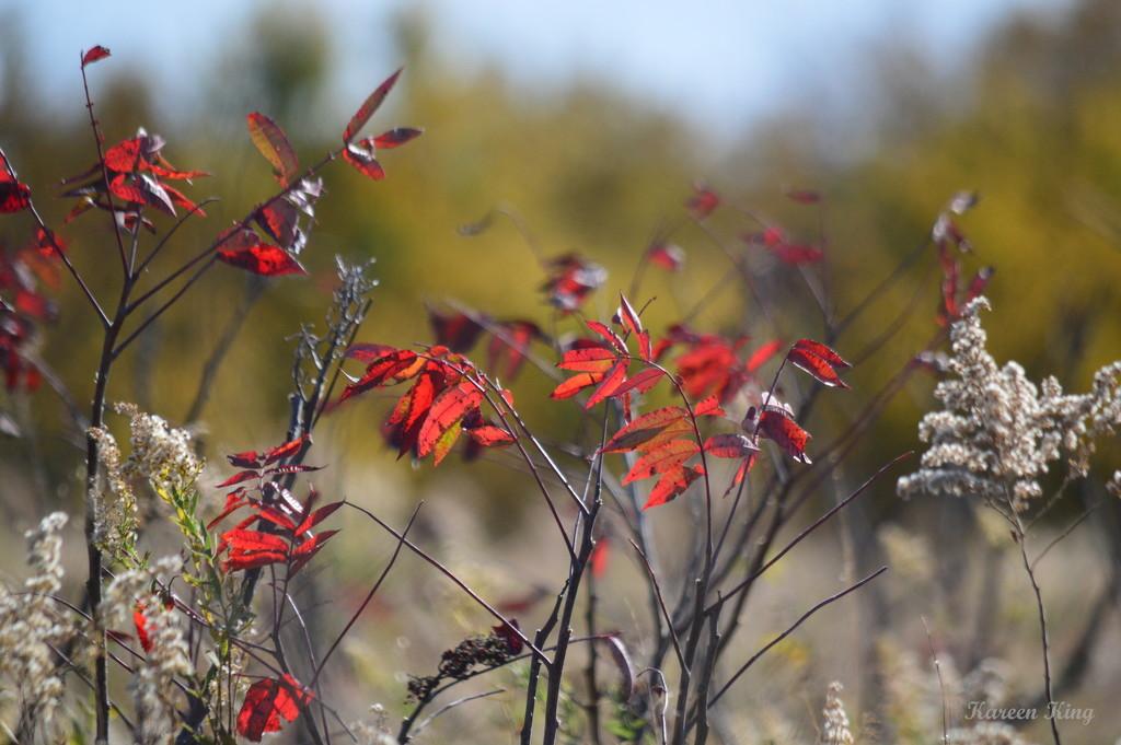Autumn Assortment by kareenking
