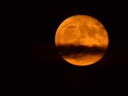16th Oct 2016 - Super Moon 10-16-16