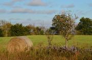 12th Oct 2016 - Nature's Lovely Arrangement