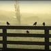 Birds in the mist by yorkshirekiwi