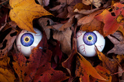 19th Oct 2016 - I'm watching you....