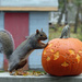 I'm here for peanuts, not a pumpkin! by gaylewood