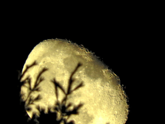 Moon Rock by Weezilou