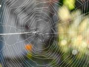 21st Oct 2016 - Web Sighting