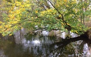 21st Oct 2016 - Tree over Huron River