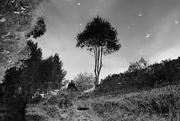 21st Oct 2016 - OCOLOY Day 295: Salterhebble Canal Trees....
