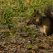 Ground Squirrel! by rickster549