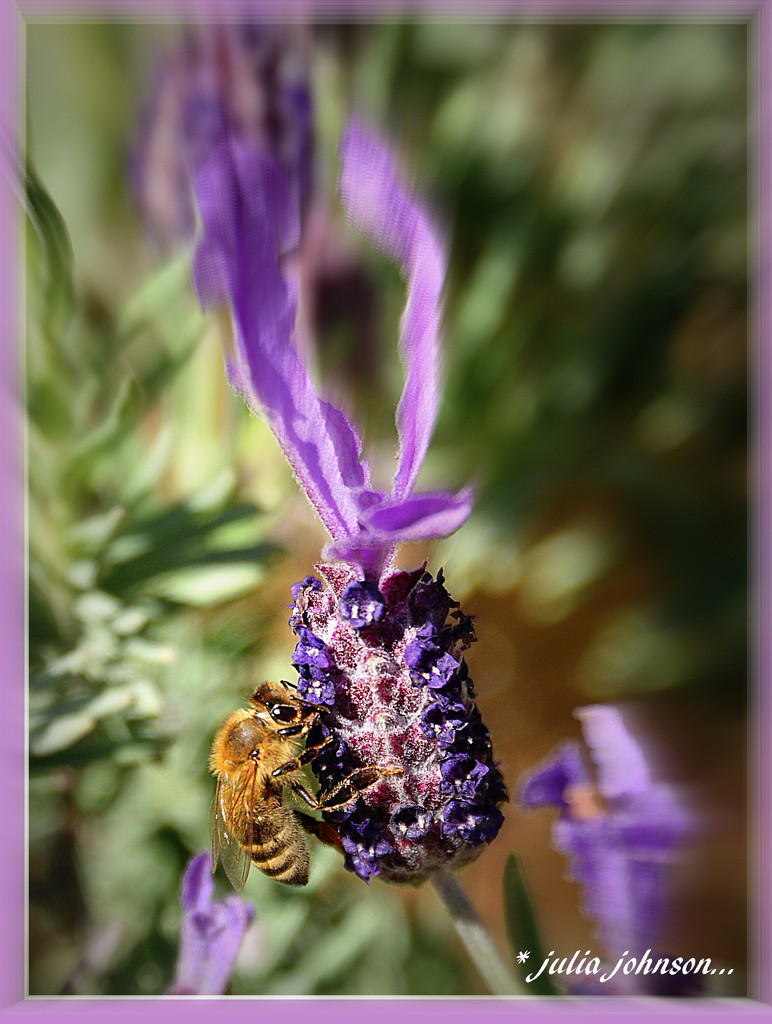 Lavender and Bee's... signs of Summer... by julzmaioro