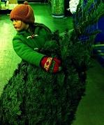 15th Dec 2010 - Rockin' Around the Christmas Tree