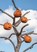 22nd Oct 2016 - Pumpkin Tree