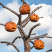 Pumpkin Tree by dridsdale