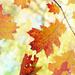 Leaves  by darlenet