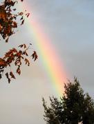 23rd Oct 2016 - Rainbow