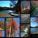Fall Pics around Bark Camp Lake