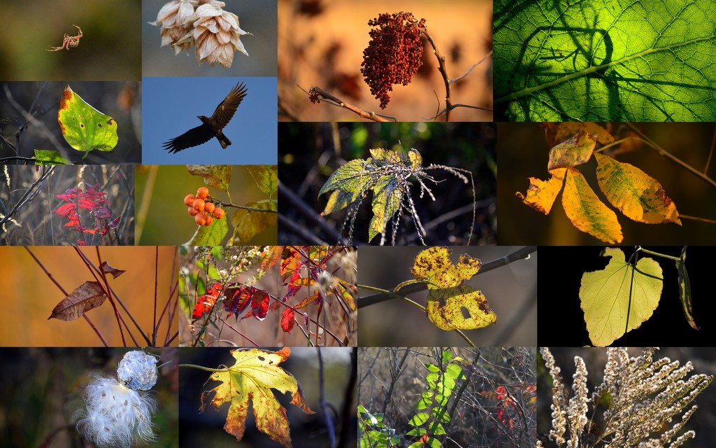 Flint Hills Nature Trail Fall Collage by kareenking