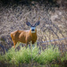 They Call Me Buck by mikegifford
