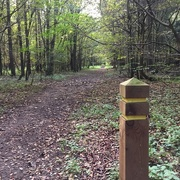 24th Oct 2016 - Following The Yellow Trail