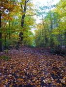 24th Oct 2016 - Autumnal Berlin