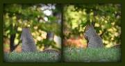 24th Oct 2016 - Squirrel bokeh
