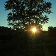 19th Oct 2016 - Last rays of sunshine