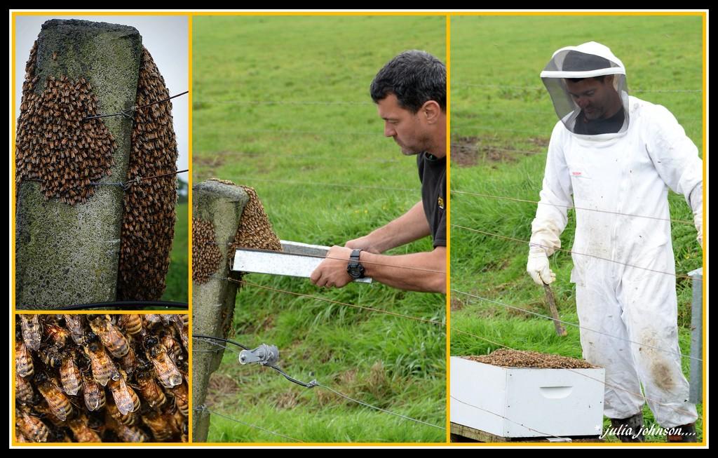 Herding Bee's.... by julzmaioro