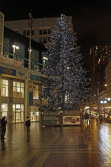 Westlake Plaza Christmas Tree by seattle