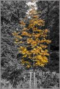 25th Oct 2016 - Colouring Autumn