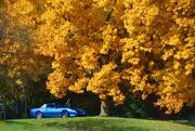 23rd Oct 2016 - Fall Parking