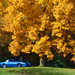 Fall Parking by vera365