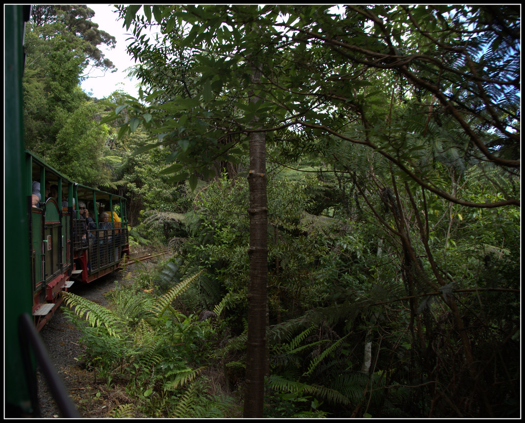 Driving Creek Railway by dide